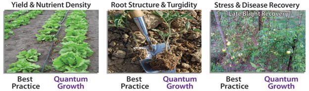 Quantum Growth MicrobeLife Organic Biological Products Agriculture Results
