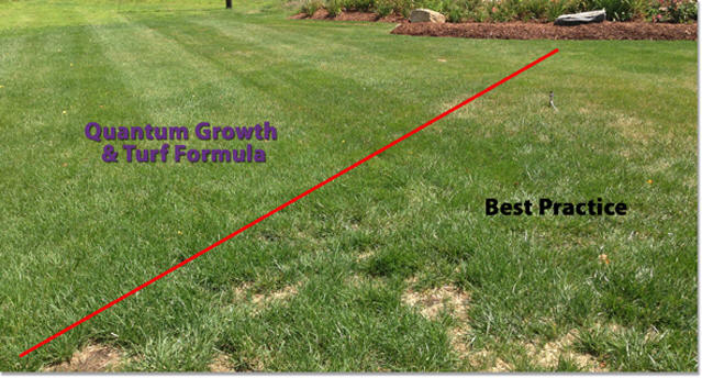 Quantum Growth Probiotics Turf Results