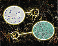 Quantum Growth MicrobeLife Phtosynthetic Microbes Soil Food Web
